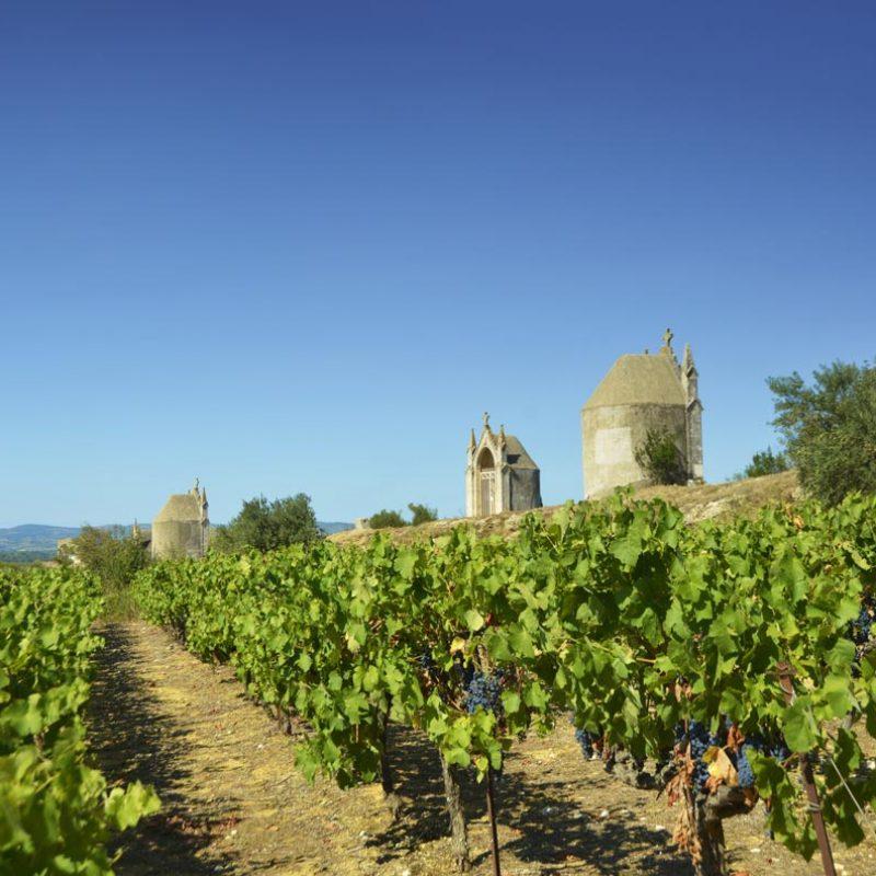 vignes-tours-et-terroirs2